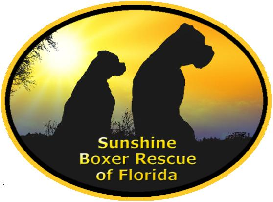 Sunshine Boxer Rescue