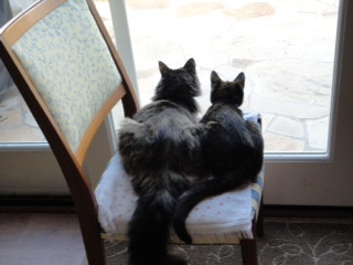 Southern Cat Connection