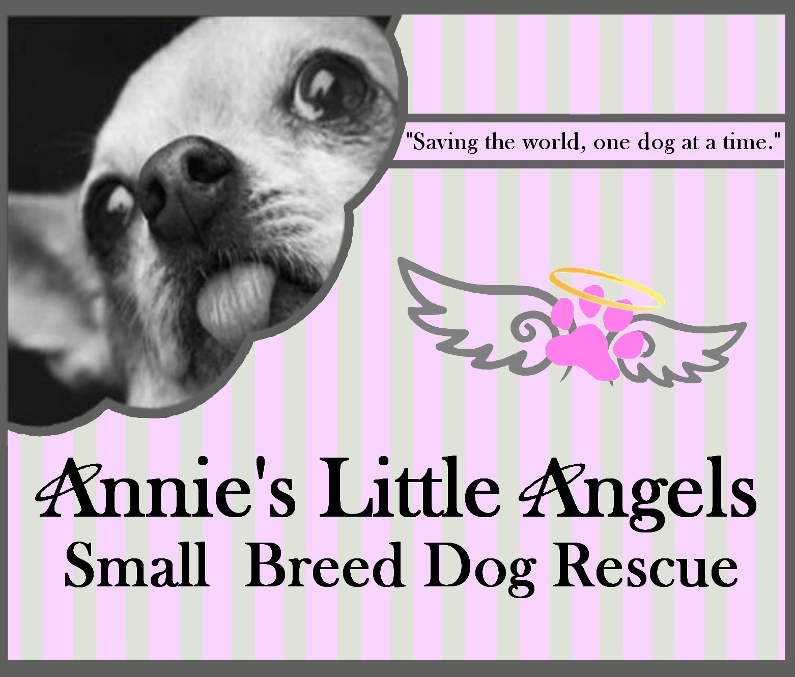 Annie's Little Angels Humane Ed & Small Breed Dog Rescue