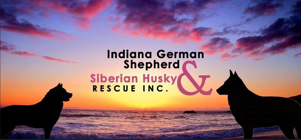 Indiana GSD & Siberian Husky Rescue Inc.