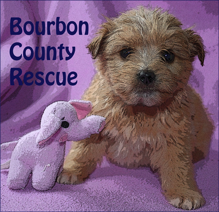 Bourbon County Rescue