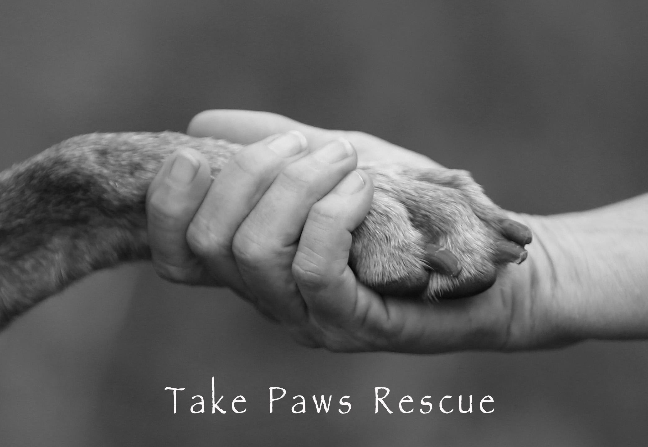 Take Paws Rescue