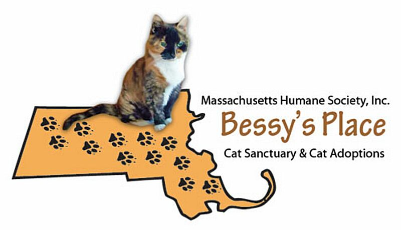 Bessy's Place Cat Sanctuary & Cat Adoption