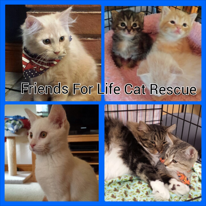 Friends for Life Cat Rescue, Inc.