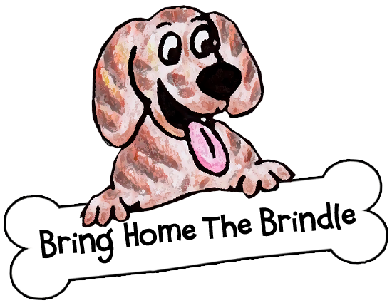 Bring Home the Brindle Dog Rescue