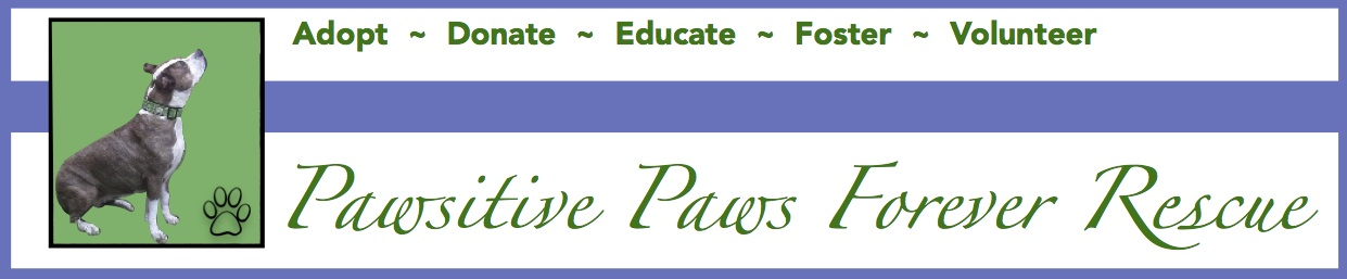 Pawsitive Paws Forever Rescue