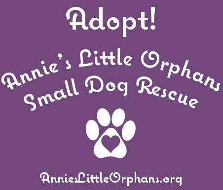 Annie's Little Orphans Small Dog Rescue