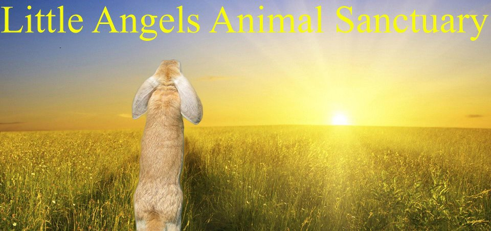 Little Angels Animal Sanctuary, Inc