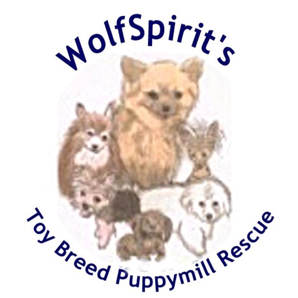 WolfSpirit's Toy Breed Puppymill Rescue