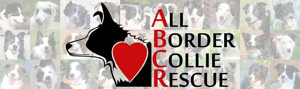 All Border Collie Rescue