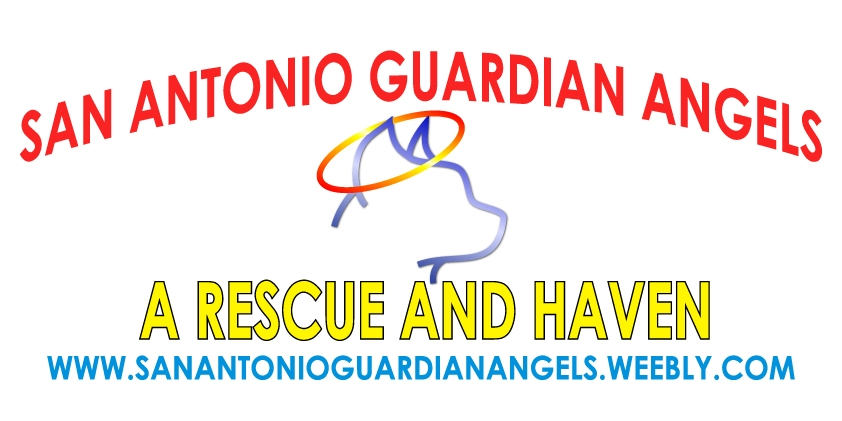 San Antonio Guardian Angels