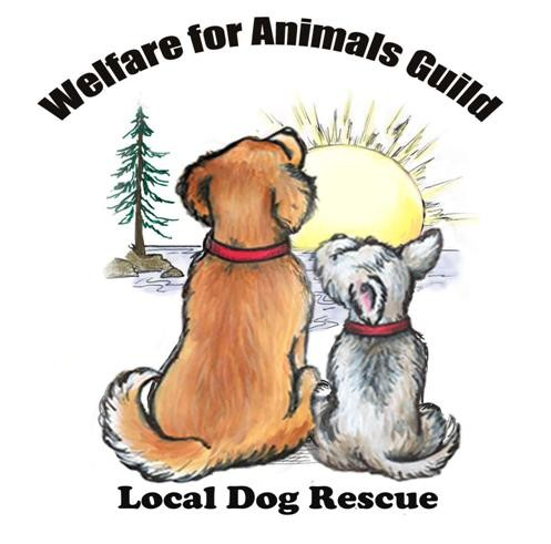 Welfare for Animals Guild (WAG)