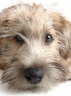 Petfinder: Search Dogs