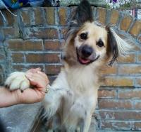adoptable dog photo, dog adoption checklist