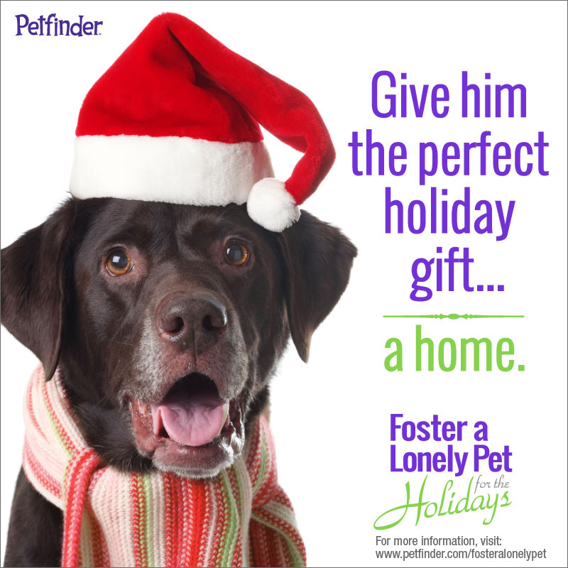 Foster a Lonely Pet for the Holidays