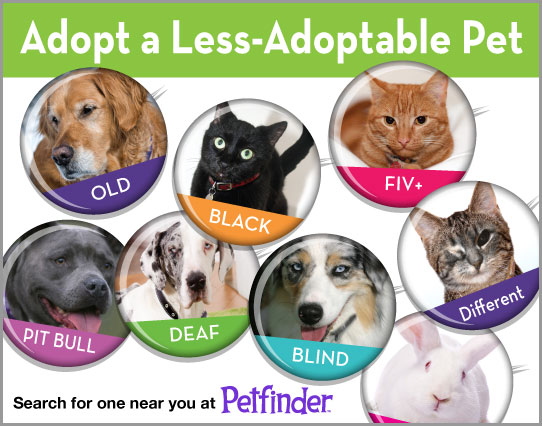 Adopt-A-Less-Adoptable-Pet Week 2012