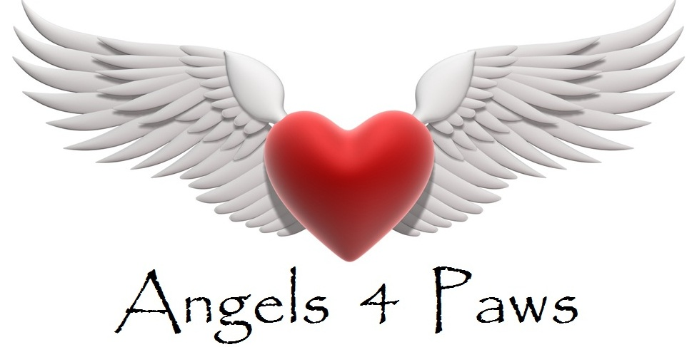 Angels 4 Paws Animal Rescue