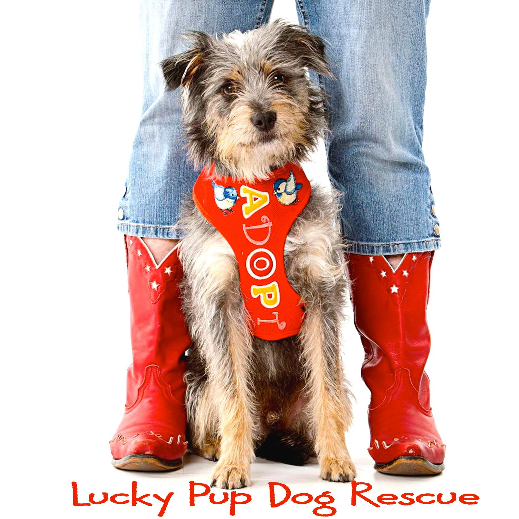 Lucky Pup Dog Rescue