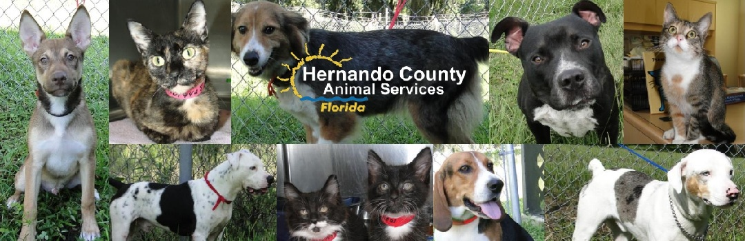 Hernando County Animal Shelter