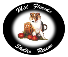 Mid Florida Sheltie Rescue