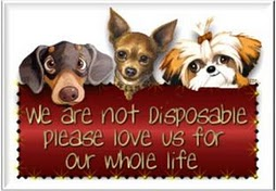 Home for Disposable Pets