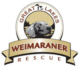 Great Lakes Weimaraner Rescue, Inc.
