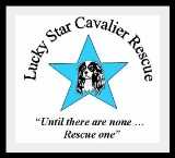 Lucky Star Cavalier Rescue