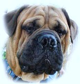 Carolina Mastiff Rescue
