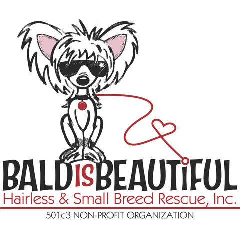 Bald Is Beautiful Hairless & Small Breed Rescue, Inc.