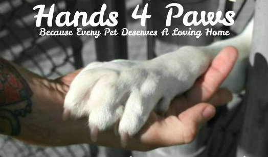 Hands 4 Paws