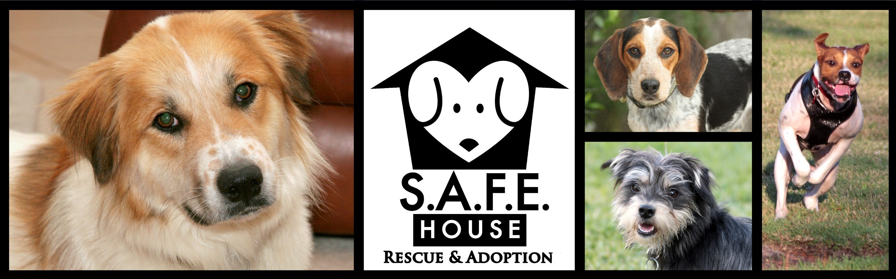 S.A.F.E. House Rescue and Adoption