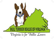 Bull Terrier Rescue of Virginia