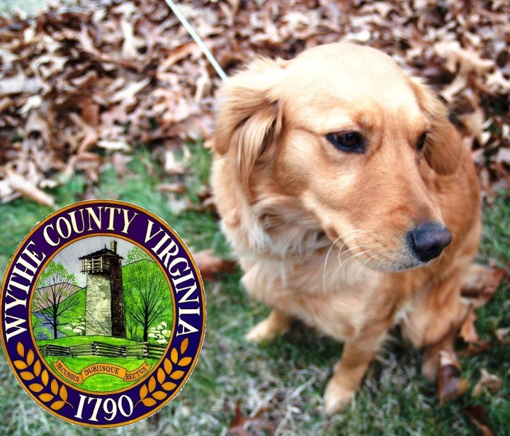 Wythe County Dog Shelter