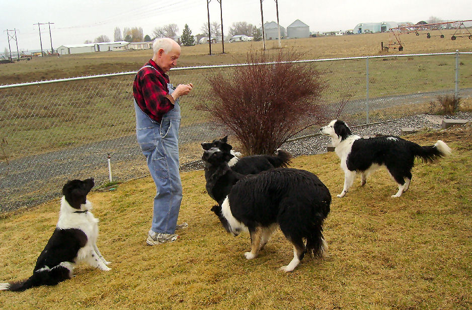 Farm Border Collie Rescue