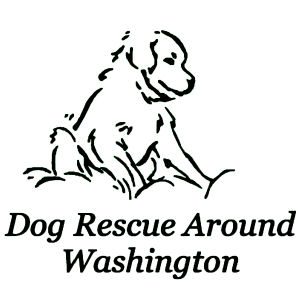 Dog Rescue Around Washington