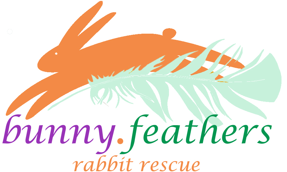 Bunny Feathers Rabbit Resource